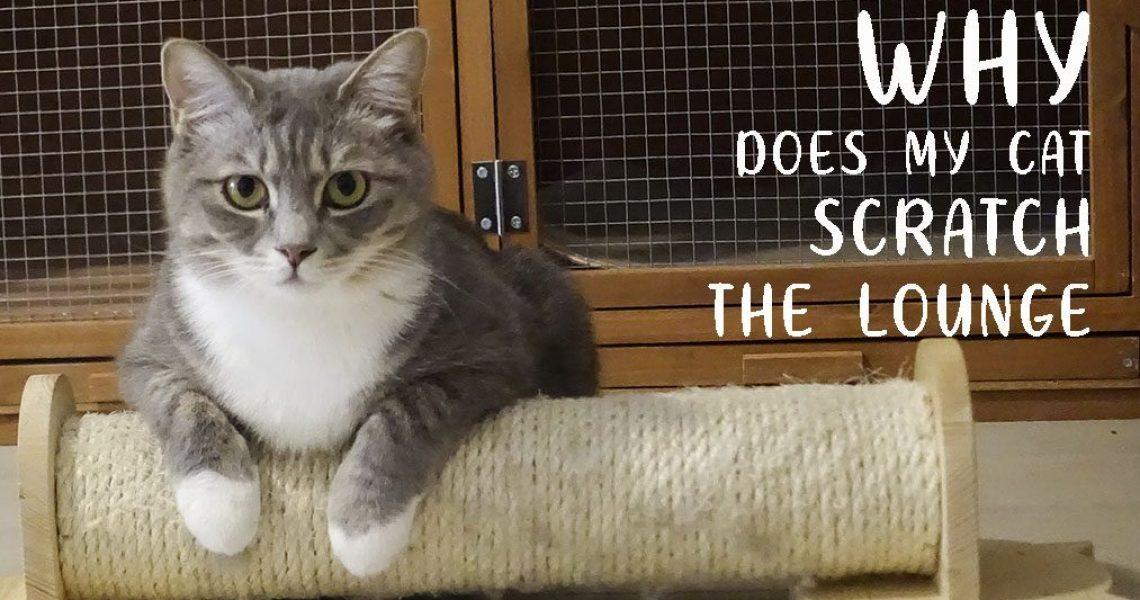 CAT UTOPIA SCRATCH BLOG
