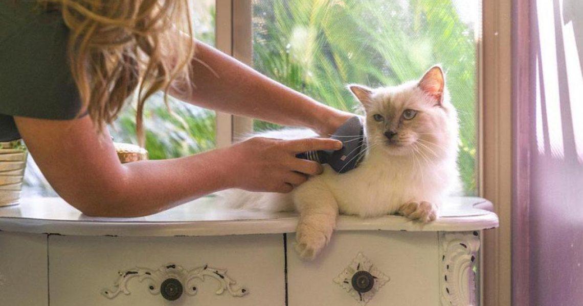 CAT-UTOPIA-boarding-BLOG copy